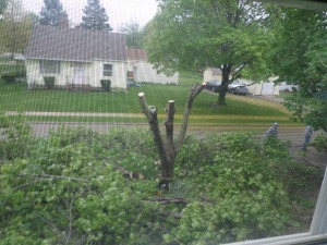 Tree Half Gone
