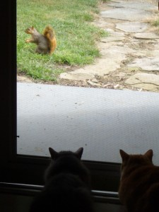 Cats Squirrel Hunting