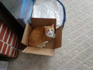 Chester's Box