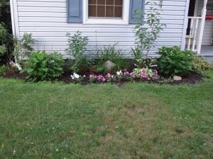 Front Garden 6-27-14