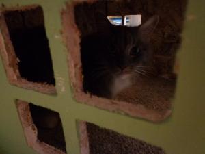 CNC Router Cat House 3