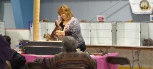 Cat Show Judging
