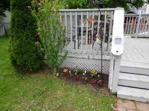 Back Door Garden After 5-24-15