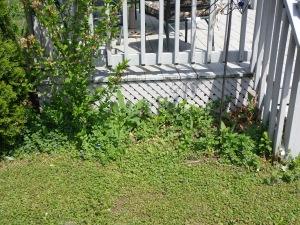 Back Door Garden Before 5-24-15