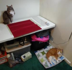 Karen's Pillow - Chester and Bob