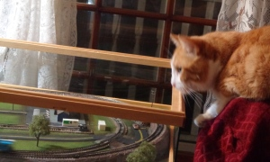 Chester Helping with the Train Table