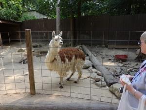Animal Park - Alpaca - 5-27-16