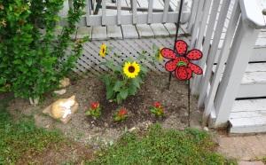 Back Door Garden 6-4-16