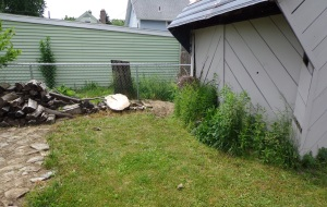 Shed Area - Weeded - 6-4-16