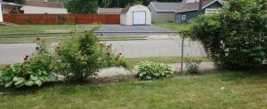 Sidewalk Garden 6-3-16