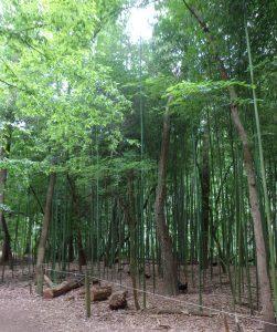 Animal Park - Bamboo - 5-27-16