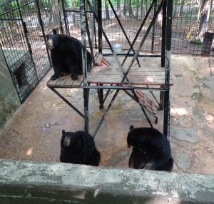 Animal Park - Black Bears - 5-27-16