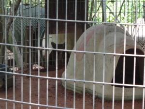 Animal Park - Coyote - 5-27-16