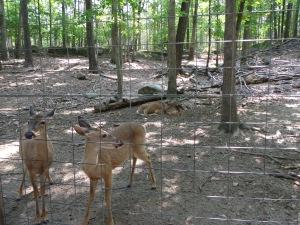 Animal Park - Deer - 5-27-16