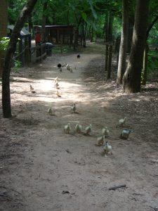 Animal Park - Duckling Stampede - 5-27-16