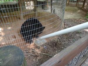 Animal Park - Lazy Black Bear - 5-27-6