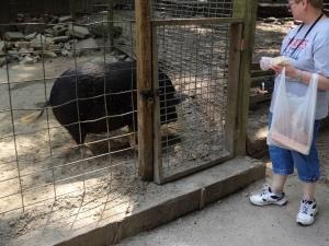 Animal Park - Pig - 5-27-16
