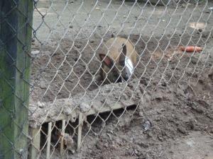 Animal Park - Rabbit - 5-27-16
