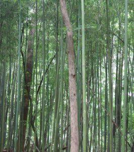 Animal Park - Up Close Bamboo - 5-27-16