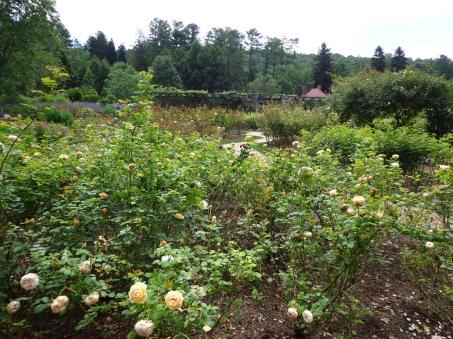 More Roses - Biltmore 7-6-17