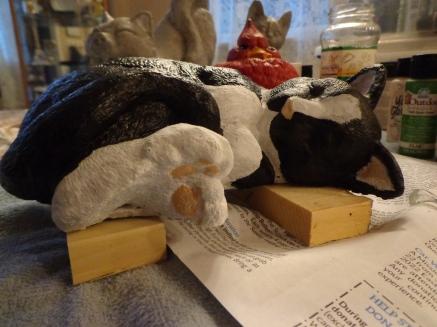 Sleeping Tuxedo Kitten 6-22-18
