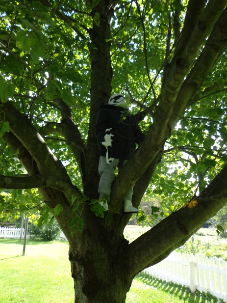 Gary Climbs A Tree