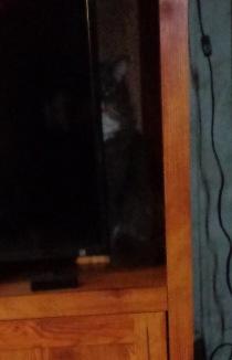 bob hiding
