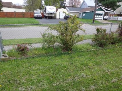 Fence Garden 5-9-19