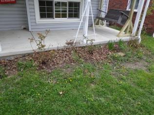Porch Roses 5-9-19