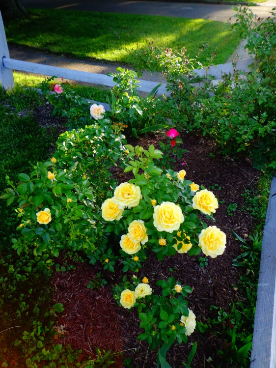 Corner Rose Garden