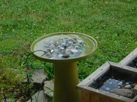 Bird Bath 7-21-20