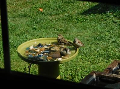Bathing Birds 2020